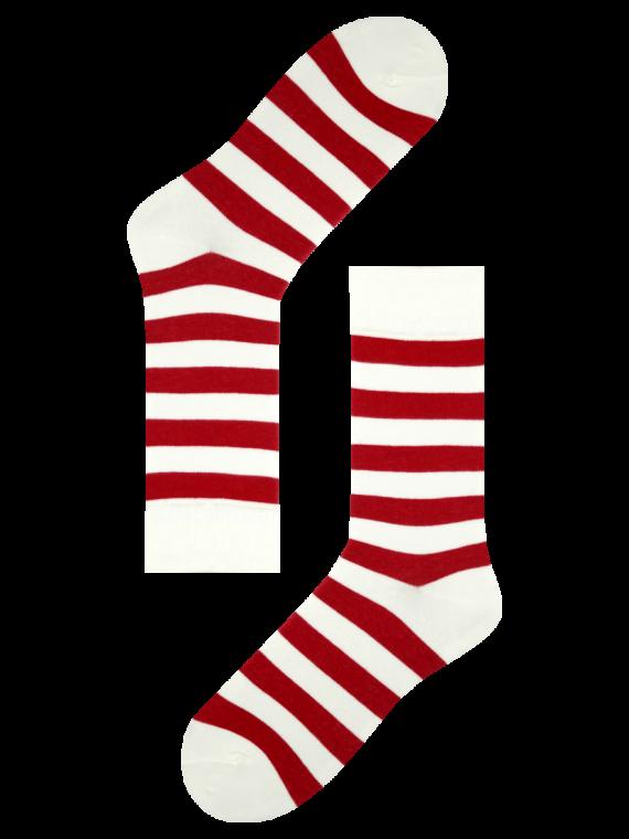 MS243 2